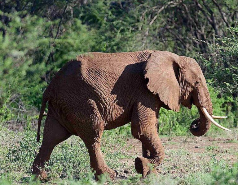 magical-kenya-road-safari
